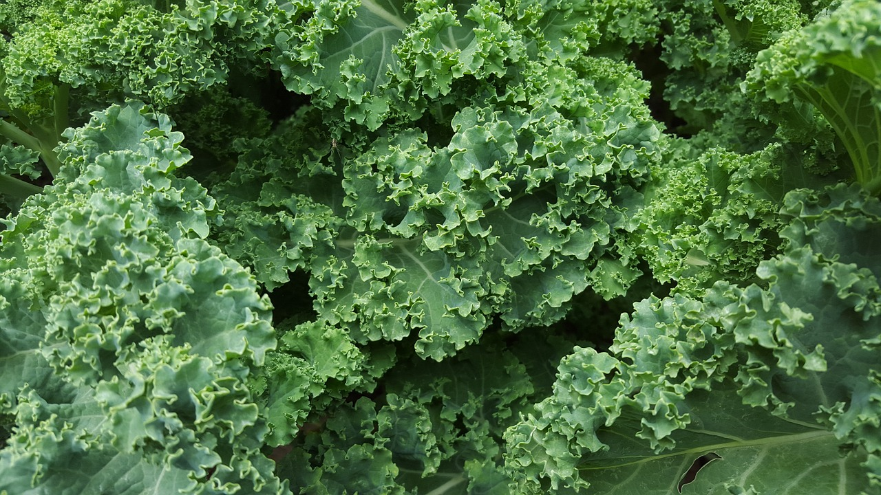 The Love Hate Relationship of Eating Kale – 3 Recipes